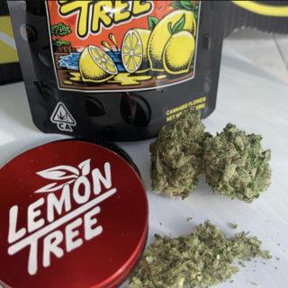 Lemon Tree (pack of 5)